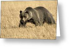 Bear On The Prowl Greeting Card