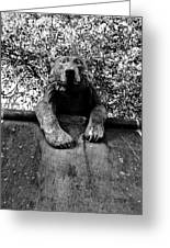 Bear On The Wall Greeting Card