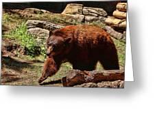 Bear Pacing Greeting Card