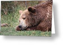 Bear Sleeping Greeting Card