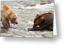 Bear Watches Another Eat Salmon In River Greeting Card