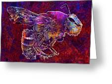 Bearded Bee Macro Insect Nature  Greeting Card