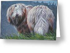 Bearded Collie In Field Greeting Card