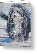 Bearded Collie In Snow Greeting Card