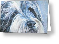Bearded Collie Up Close In Snow Greeting Card