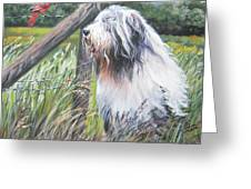 Bearded Collie With Cardinal Greeting Card