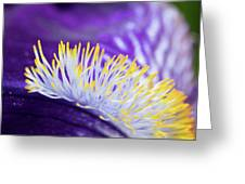 Bearded Iris Macro Greeting Card