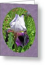 Bearded Iris Blossom Greeting Card