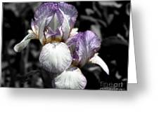 Bearded Irises Partial Color Greeting Card