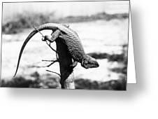Bearded Lizard Greeting Card