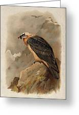 Bearded Vulture By Thorburn Greeting Card