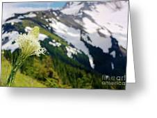 Beargrass Flower On The Slopes Of Mt. Hood Greeting Card