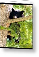 Bearlaxin Greeting Card