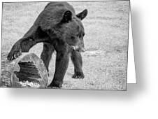 Bear's Log Stash Of Treats - Black And White Greeting Card