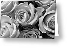 Beauties In Black And White Greeting Card