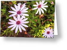 Beautiful African White Daisies Greeting Card