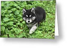 Beautiful Alusky Puppy Peaking Out Of Green Foliage Greeting Card