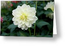 Beautiful And Fresh Dahlias In The Butchrt  Gardens,vancouver Island 3. Greeting Card