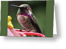 Beautiful Anna's Hummingbird On Perch Greeting Card