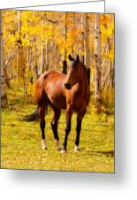 Beautiful Autumn Horse Greeting Card