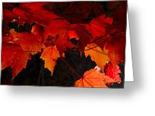 Beautiful Backlit Autumn Maple Leaves Greeting Card