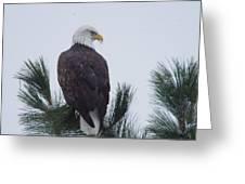 Beautiful Bald Eagle Greeting Card