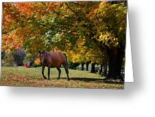 Beautiful Bay Horse In Fall Greeting Card