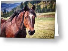 Beautiful Bay Horse In Pasture Greeting Card