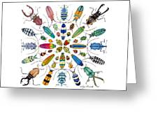 Beautiful Beetles Greeting Card