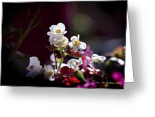 Beautiful Begonia Greeting Card