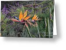 Beautiful Bird Of Paradise Flower In Bloom Greeting Card