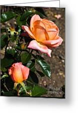 Beautiful Bloom Of The Rose Atlantic Star Greeting Card