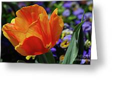 Beautiful Blooming Orange And Red Tulip Flower Blossom Greeting Card