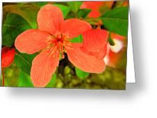 Beautiful Blossom Greeting Card
