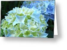 Beautiful Blue Hydrangea Floral Art Prints Creamy White Pastel Greeting Card