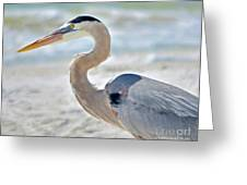 Beautiful Blue On The Beach Greeting Card