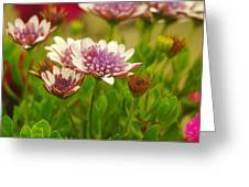 Beautiful Boquet Greeting Card