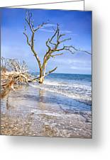 Beautiful Botany Bay Beach  Greeting Card