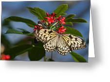 Beautiful Broken Wings Greeting Card
