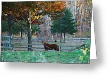 Beautiful Brown Horse Greeting Card