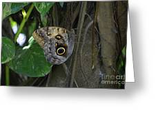 Beautiful Brown Morpho Butterfly In A Lush Garden  Greeting Card