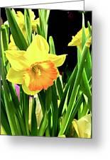 Beautiful Buttercups Greeting Card