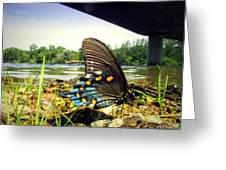 Beautiful Butterfly At The River II Greeting Card