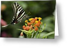 Beautiful Butterfly Waving Greeting Card