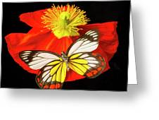 Beautiful Butterfly On Poppy Greeting Card
