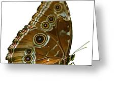 Beautiful Butterfly Wings Of Meadow Brown Isolated Greeting Card