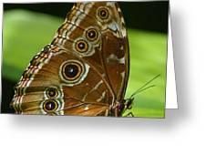 Beautiful Butterfly Wings Of Meadow Brown Greeting Card