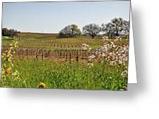 Beautiful California Vineyard Framed With Flowers Greeting Card