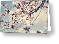 Beautiful Cherry Tree Blossom Greeting Card