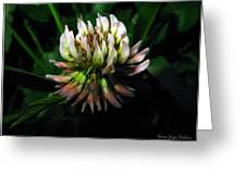 Beautiful Clover Blossom Greeting Card